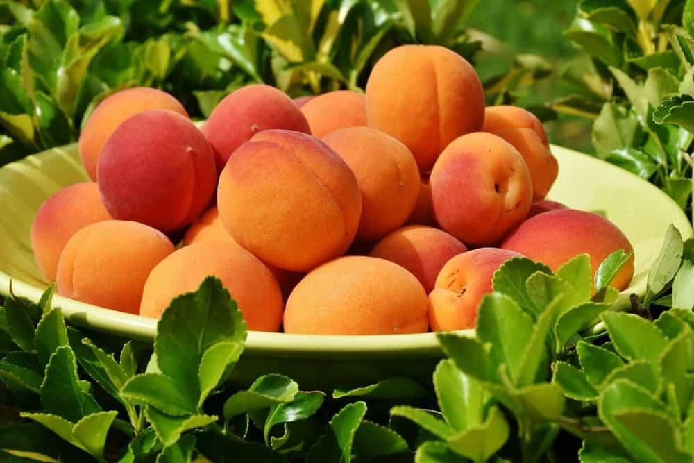 zero-calorie-foods-apricots