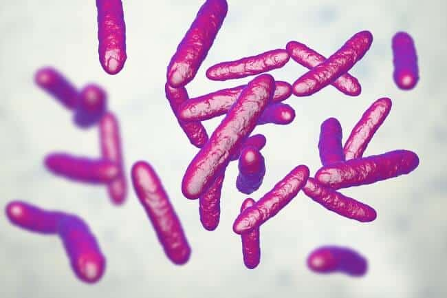 best probiotics for women - probiotic bacteria
